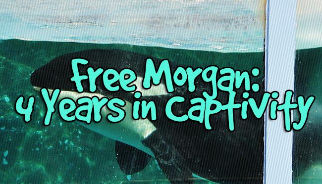 Free Morgan: Highlighting her Fourth Year ofCaptivity