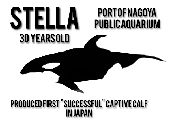 8-Stella