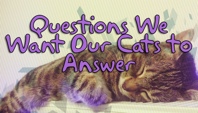 Fairly Random Friday: Questions We Want Our Cats to Answer