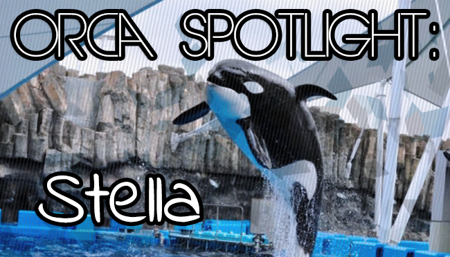 Whale Wednesday: Spotlight onStella