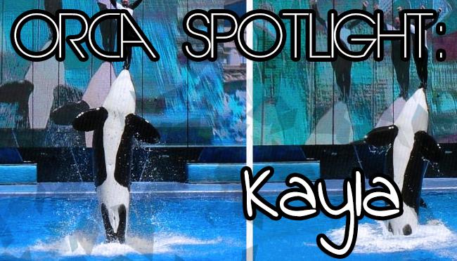 Whale Wednesday: Spotlight onKayla