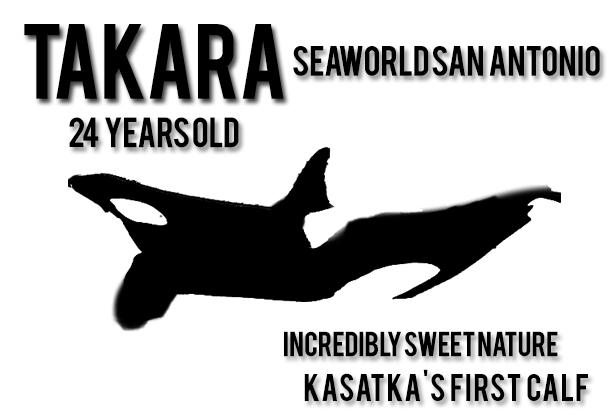 11- Takara1