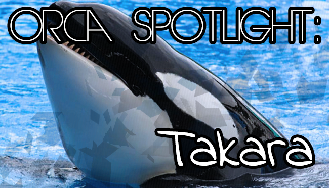 Whale Wednesday: Spotlight onTakara