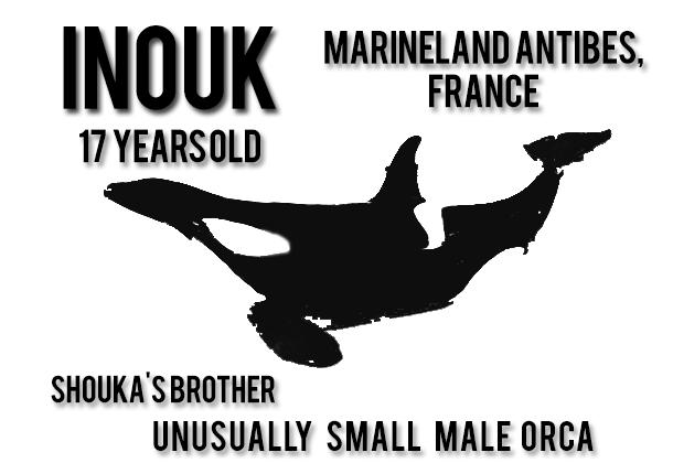 18 - Inouk