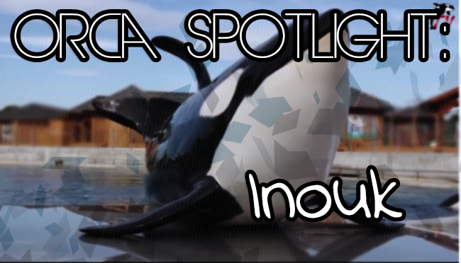 Spotlight on Inouk | Whale Wednesday