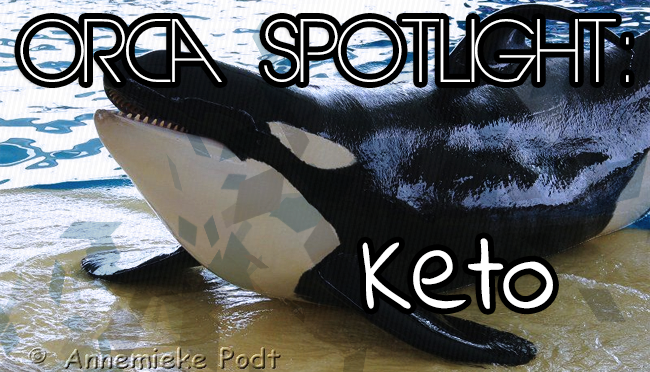 Whale Wednesday: Spotlight on Keto