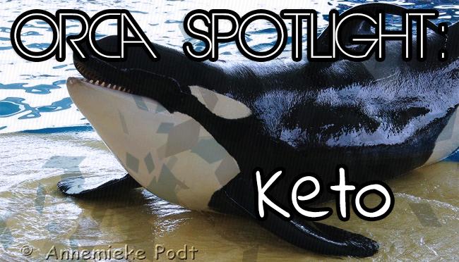 Whale Wednesday: Spotlight onKeto