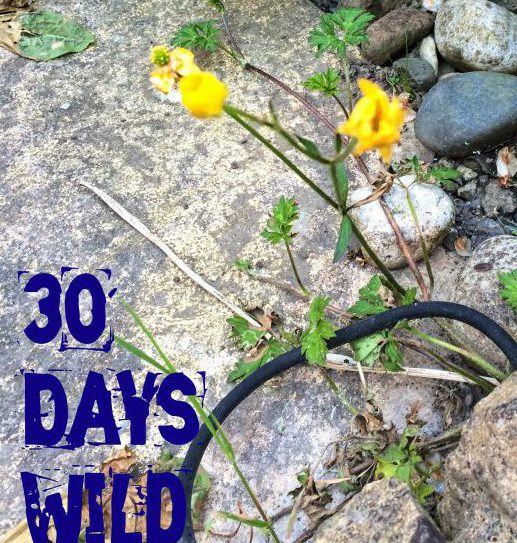 Day Two: Find a Wildflower |#30DaysWild