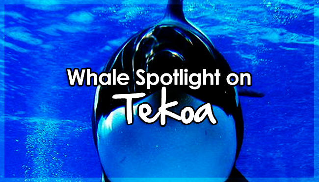 Animal Rights | Spotlight on Tekoa