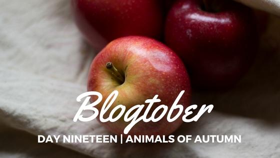 Blogtober| Day Twenty – Favourite AppleRecipes