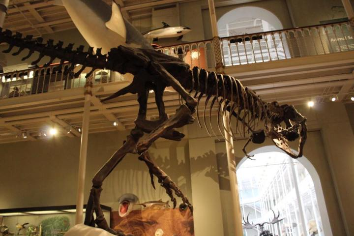 National Museum of Scotland Tyrannosaurus Rex Cast