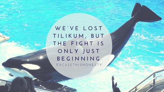 Animal Rights| We've Lost Tilikum, but the Fight is Only JustBeginning