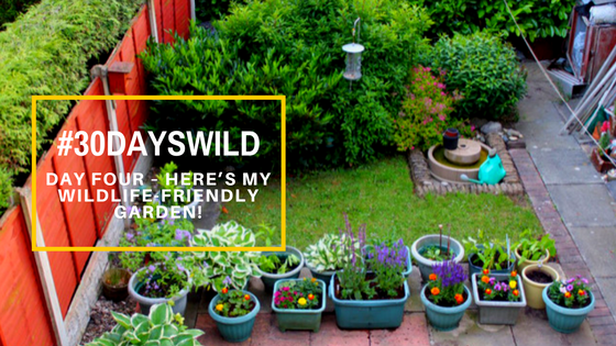 #30DaysWild| Day Four – Here's My Wildlife-Friendly Garden!