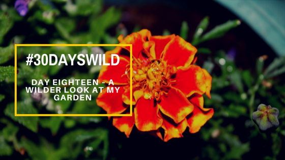 #30DaysWild | Day Eighteen – A Wilder Look At My Garden