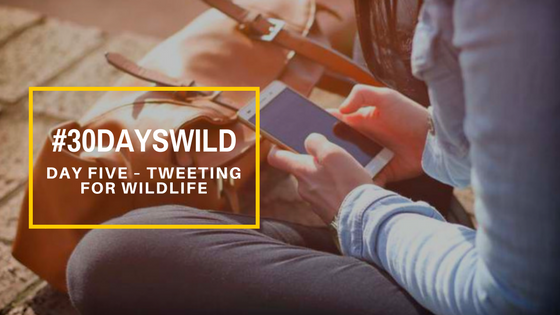 #30DaysWild| Day Five – Tweeting for Wildlife