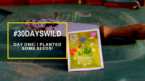 #30DaysWild| Day One – I Planted Some Seeds! 🌾🍃🌿🌱🌺🌸