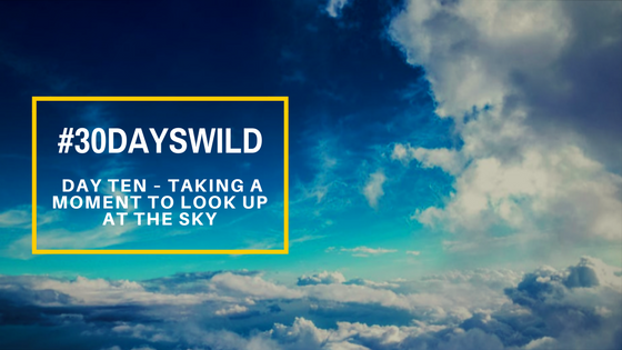 #30DaysWild | Day Ten – Taking a Moment to Look Up at the Sky