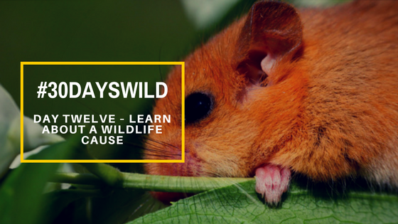 #30DaysWild | Day Twelve – Learn About a Wildlife Cause